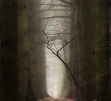 The Path by jenndiguglielmo