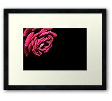 Macro - Red Rose Framed Print