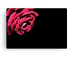 Macro - Red Rose Canvas Print