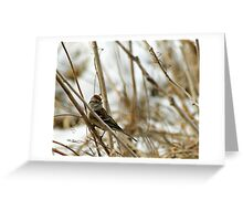 Song Sparrow Near Creek in March Greeting Card