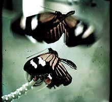 butterflies dance by Virag Anna Margittai