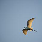 Evening Flight by Craig Hender