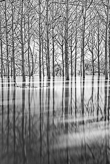 Waterlogged by Paul Whittingham