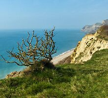 Coastal Path ~ West Bay To Eype by Susie Peek