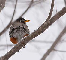 Winter Robin Bum by Benjamin Brauer