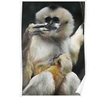 White-cheeked Gibbons Poster