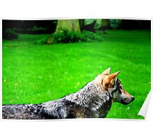 A Wolf in the Grass Poster