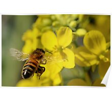 Bee Free Poster