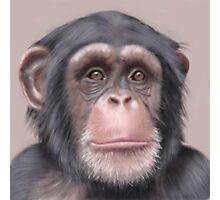 A. Chimp Photographic Print