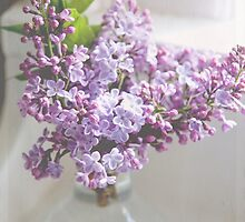 Dreamy Lilacs by Angi Allen