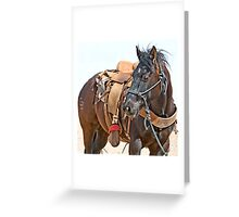 Competition Trained  Greeting Card