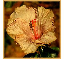 The Beauty Of Aging ~ Part Three Photographic Print