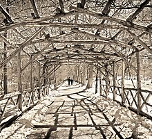 Central Park, New York by Melissa Fiene