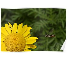 Hover Fly Poster
