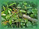 Eastern Pondhawk Female Dragonfly - Erythemis simplicicollis - on Pine Needles by MotherNature