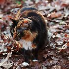 Camo Kitty by mojo1160