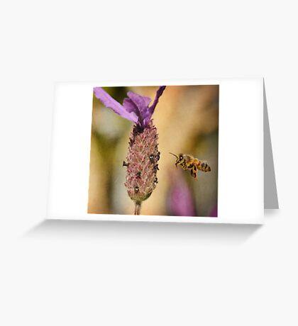 Lavender Bee-port Greeting Card