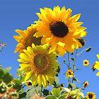 Sunflowers by robertemerald