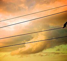 Birdie on Wire - Key West by emilymasiello