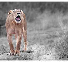 The Roar Photographic Print