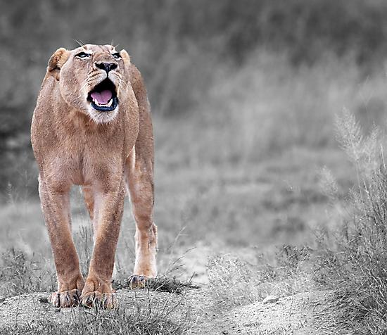The Roar by Michael  Moss