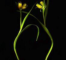 Dancing Fritillaria by Barbara Wyeth