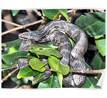 Southern Water Snake Poster