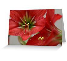 Floral Lilly  Greeting Card