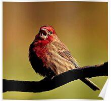 Sing little bird Sing~ Poster