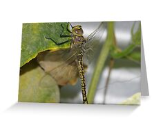 The dragon fly Greeting Card
