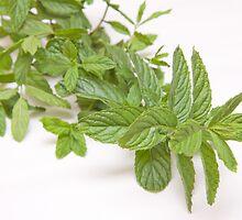 fresh mint on white(Mentha) by rajeshbac