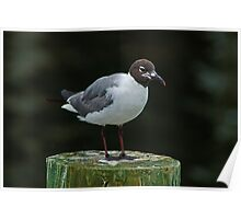 Seagull on a Piling Poster