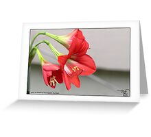 Lilly _ Red  Greeting Card