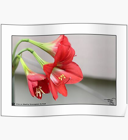 Lilly _ Red  Poster
