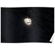 Basking in the moonlight! Poster