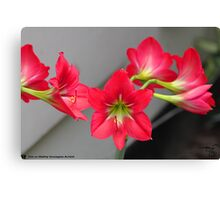 Love Lilly  Canvas Print