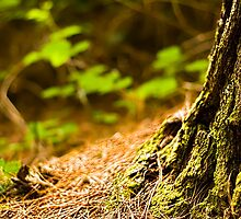 Gentle forest by Jocelyn  Parry-Jones