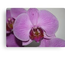 Sogo Cherry Orchid Canvas Print