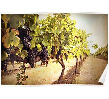 Vintage Vines Poster