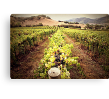 A Mudgee Vineyard Canvas Print