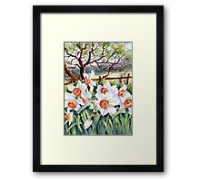 Narcissi in a field Framed Print