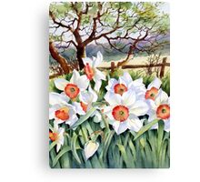 Narcissi in a field Canvas Print