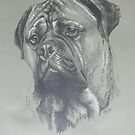 Bullmastiff by BarbBarcikKeith