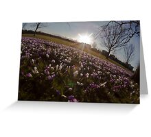 Crocus sunset Greeting Card