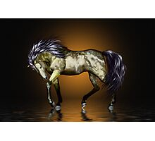 Metalica .. golden stallion  Photographic Print