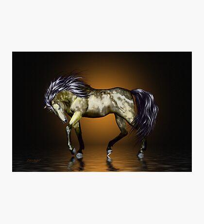 Metalica .. golden stallion  Photographic Print