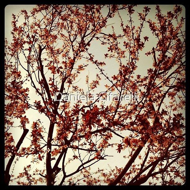 Spring, at last! by Daniela Cifarelli