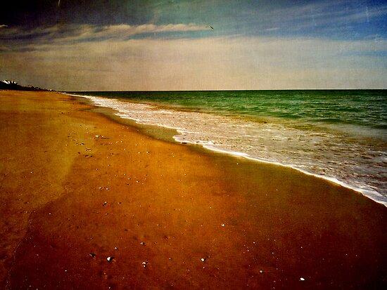 Florida Seascape by enchantedImages
