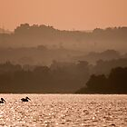 Pelicans on Lake Tana by Karen Millard
