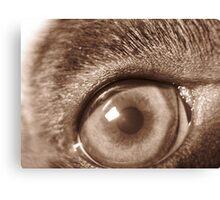 puppy eye Canvas Print